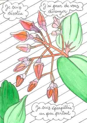 Fuchsia montagne